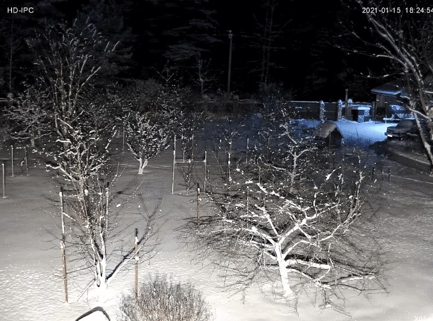 Загородный участок, освещенный линзованным светодиодным прожектором.
